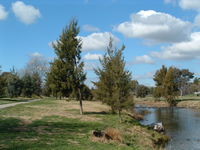 Macquarie River Walkway